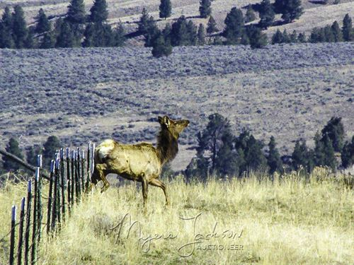 Land For Sale Montana : Stevensville : Ravalli County : Montana