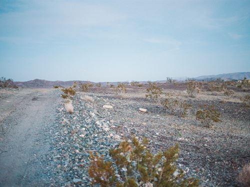 Rare Joshua Tree Hillside : Joshua Tree : San Bernardino County : California