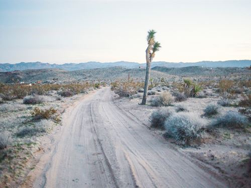 Serene Hillside Location : Joshua Tree : San Bernardino County : California