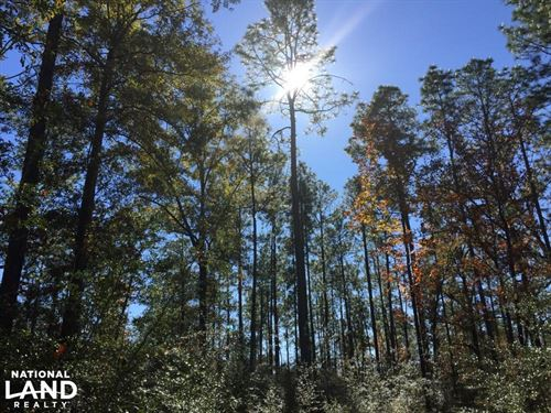 Boothtown Road Big Creek Tract : Citronelle : Mobile County : Alabama