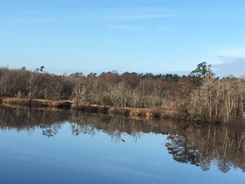 Black River Property : Georgetown County : South Carolina