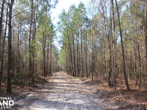 Bonneau 45 Acre Home Site : Bonneau : Berkeley County : South Carolina