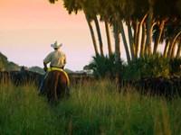 Three Ranch Parcels : Okeechobee : Okeechobee County : Florida