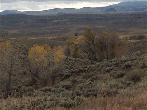 40 Acres In Gunnison : Gunnison County : Colorado
