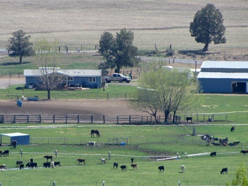 ranch and new bonanza farms