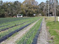 Turn Key Produce Farm 80.53 Ac : Gainesville : Alachua County : Florida