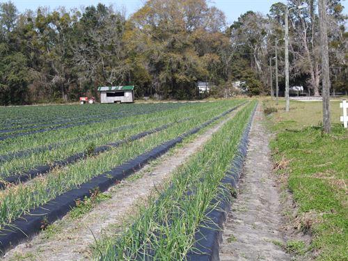 Turn Key Produce Farm 80.53 Ac : Gainesville : Alachua County : Florida