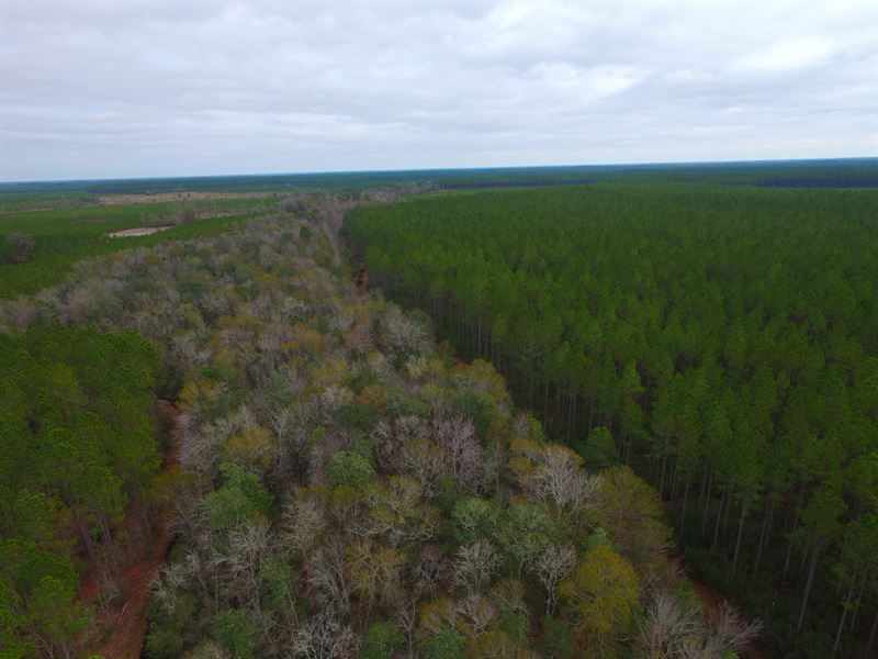 935617c046ff 243 Acre Timberland And Hunting   Farm for Sale   Manor   Ware ...