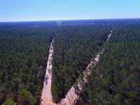 175 Acre Timberland Investment : Manor : Ware County : Georgia