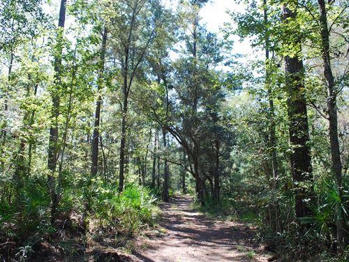 108 Acres Humpback Rd : Hortense : Brantley County : Georgia