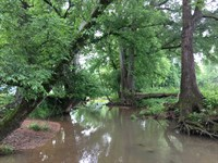 Cattle Farm With Creek : Adairsville : Bartow County : Georgia