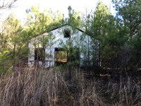 Land For Sale - Louisville, Ms : Louisville : Winston County : Mississippi
