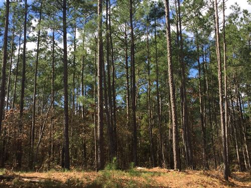 41 Ac Union Springs Rd. : Corrigan : Polk County : Texas