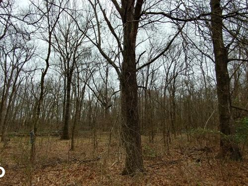 84 Acre Southeast Arkansas Deer : Eudora : Chicot County : Arkansas
