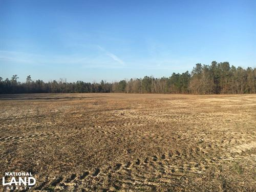 Aynor Agriculture Property : Aynor : Horry County : South Carolina