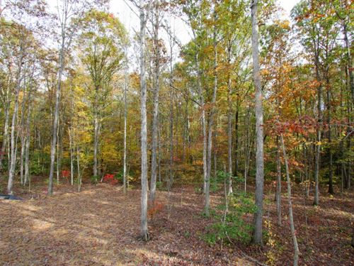 8.8 Acre Building Lot : Bumpass : Louisa County : Virginia