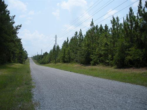 Longleaf Pine Plantation Still Road : Walnut Hill : Escambia County : Florida