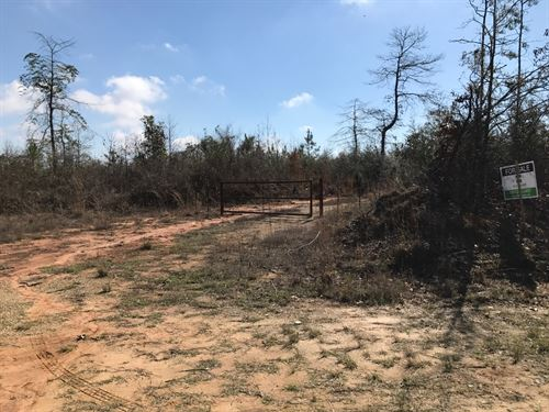 Excellent Hunting Tract : Waynesboro : Wayne County : Mississippi