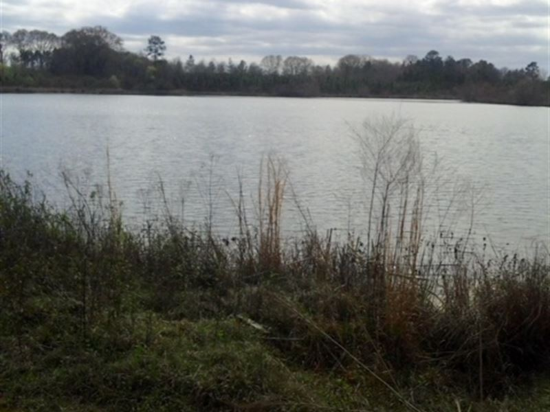 Price Reduced- Land, Pond Wilcox Co : Abbeville : Wilcox County : Georgia