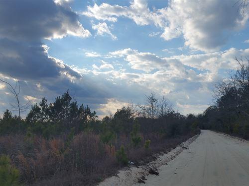 Wagontong North Tract : Wagener : Aiken County : South Carolina