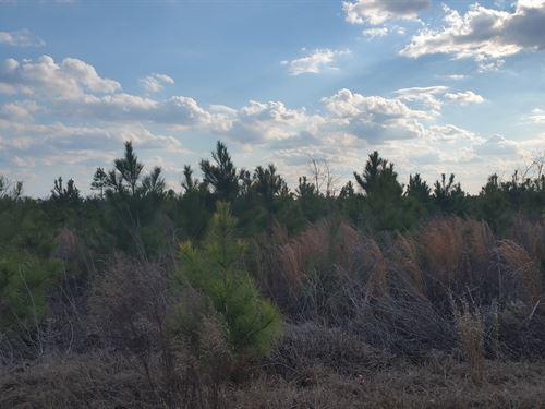 Wagontong South Tract : Wagener : Aiken County : South Carolina