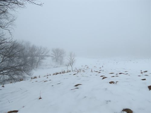 36+/- Acres For Hunting/Building : Amherst Junction : Portage County : Wisconsin