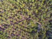 Price Drop - Florida Hunting Land : Monticello : Jefferson County : Florida