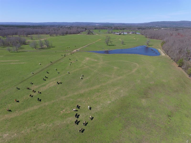 6,000 Ft On Creek, Pasture & Ponds : Ashville : Saint Clair County : Alabama