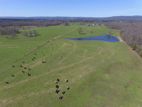 6,000 Ft On Creek, Pasture & Ponds : Ashville : Saint Clair County : Alabama