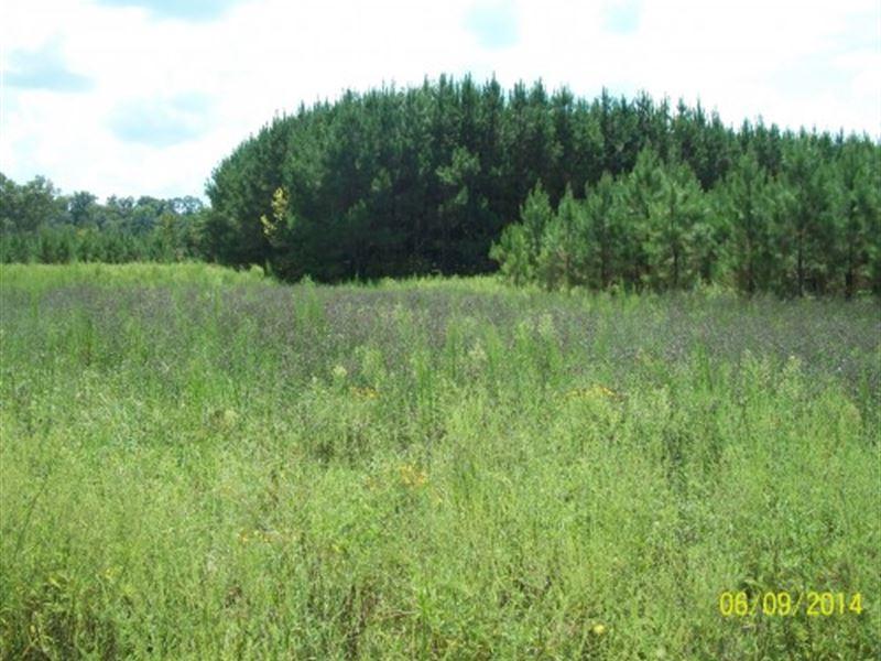 The Morgan Creek Landing : Saco : Pike County : Alabama