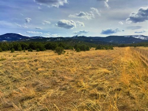 Unique Mountain Acreage : South Fork : Rio Grande County : Colorado