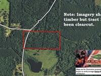20 Ac - Pine Timberland Cutover For : Choudrant : Lincoln Parish : Louisiana