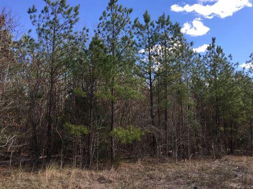 Hurych & Underwood - Welch Rd 18 Ac : Robbins : Moore County : North Carolina