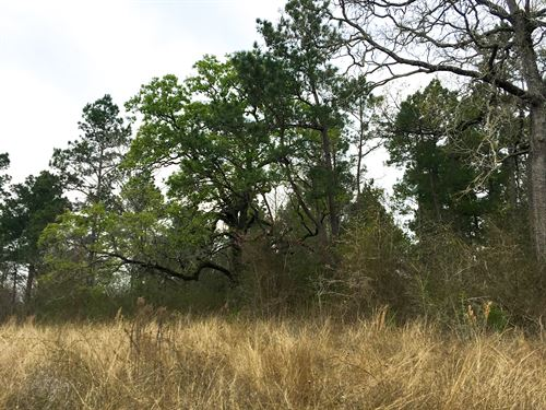 12 Ac Wilderness Road : Point Blank : San Jacinto County : Texas