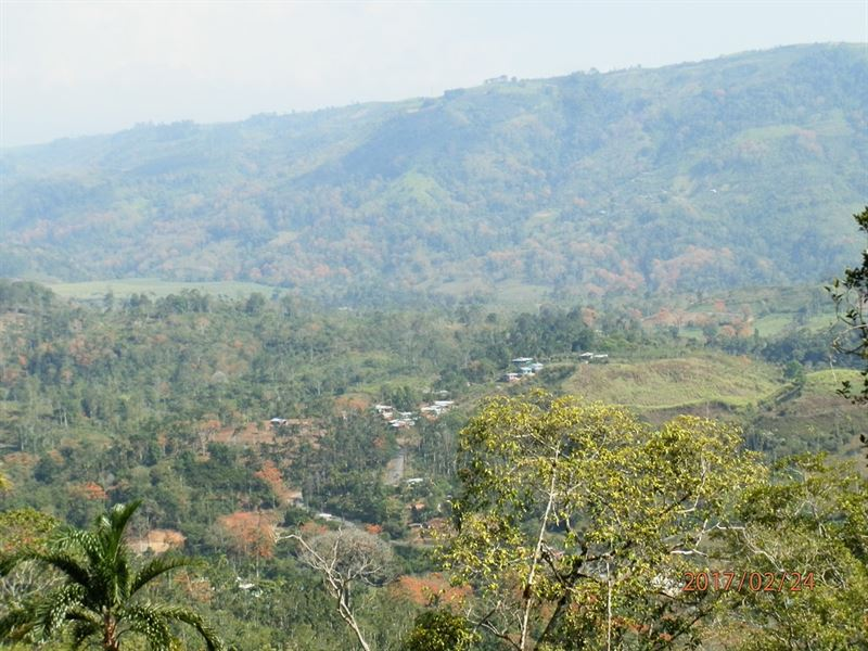 71/2 Ac Cattle Farm With Views : Tucurrique : Costa Rica