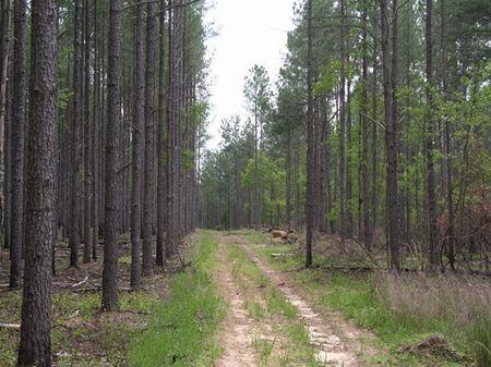 Dolby Road Farms : Williston : Barnwell County : South Carolina