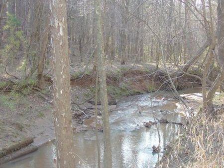 Turkey Creek Tract : Blair : Fairfield County : South Carolina