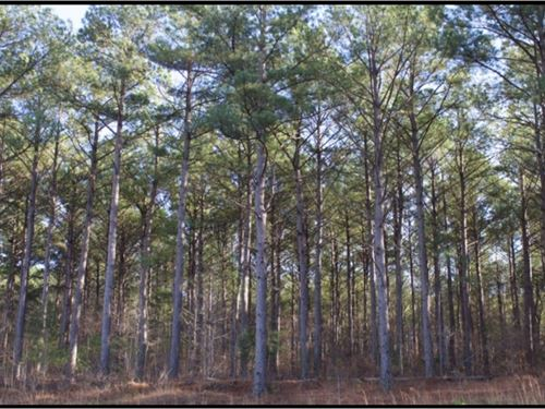 156 Acres In Choctaw County : Mathiston : Choctaw County : Mississippi