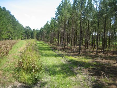 Cedar Creek Farm : Tugtown : Orangeburg County : South Carolina
