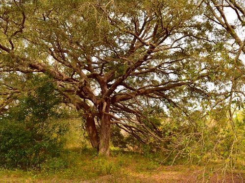 Magnolia Springs Tract : Magnolia Springs : Baldwin County : Alabama
