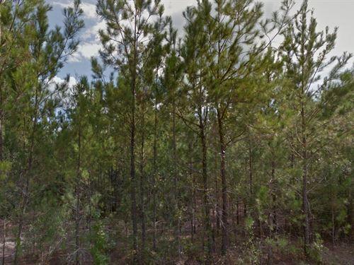 Vacant Acreage For Sale : Valdosta : Lowndes County : Georgia