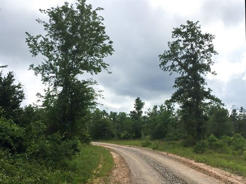 10 Ac Willow Springs Road : Oakhurst : San Jacinto County : Texas