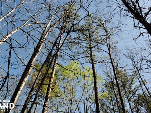 Highway 43 North Investment Tract : Linden : Marengo County : Alabama