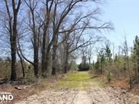 Olar Longleaf Hunting Estate : Olar : Barnwell County : South Carolina