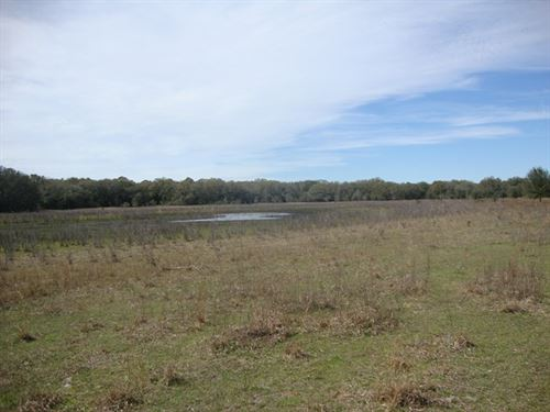 578 Acres Of Old Florida 773447 : Chiefland : Levy County : Florida