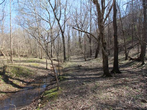 51 Ac With Mature Hardwoods : Mount Pleasant : Maury County : Tennessee