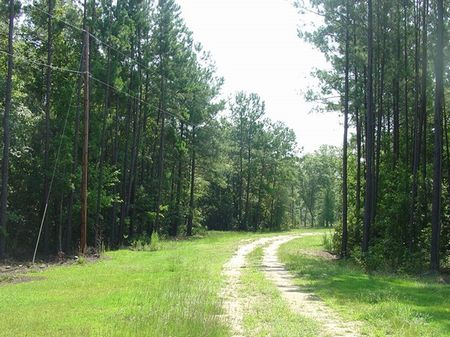 Wolfe Creek Farm : Walterboro : Colleton County : South Carolina