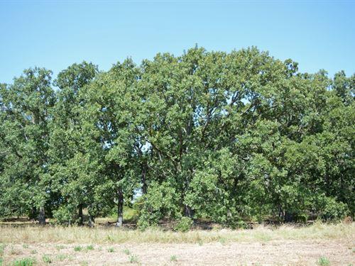158+ Acres : Winnsboro : Hopkins County : Texas