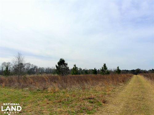 Lamar Hunting Land : Lamar : Darlington County : South Carolina