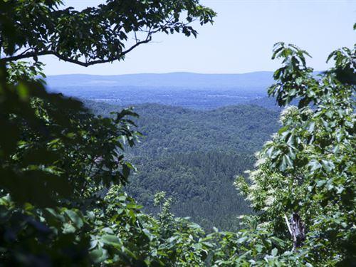 Colvin Mtn. Timberland : Gadsden : Etowah County : Alabama